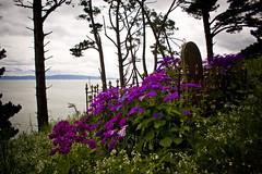A Promising Prospect (C & R Driver-Burgess) Tags: grave tomb cemetery peaceful daytime green hillside grass impatiens purple pine trees sea firth hauraki gulf tikapa spring