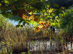 Walkers (jeffcbowen) Tags: fall foliage toronto grenadierpond highpark