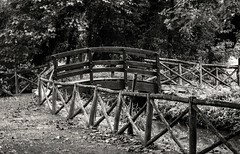 Remains (Leonardo Roina) Tags: old bridge black white river moon pic picture bn wood forest wooden nature green