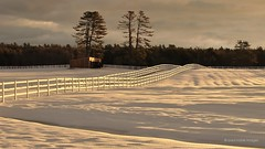 pasture in white (Explore) (paul noble photography) Tags: winter snow fence nikon maine newengland explore serene cumberland goldenhour 35mm18 nikon35mm18 paulnobleimages paulnoblephotography cabotmorgans