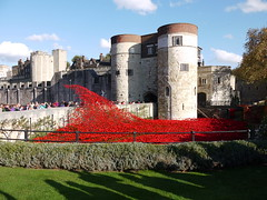 Blood Swept Lands and Seas of Red - Poppies at the Tower of London (DarloRich2009) Tags: uk greatbritain england london castle thames unitedkingdom poppy poppies gb riverthames toweroflondon cityoflondon rememberanceday thetower towerhamlets hrp thetoweroflondon cityofwestminster remeberance tompiper londonboroughoftowerhamlets historicroyalpalaces hermajestysroyalpalaceandfortress paulcummins poppiesatthetower towerpoppies bloodsweptlandsandseasofred toweroflondonpoppies poppiesinthemoat toweroflondonremembers