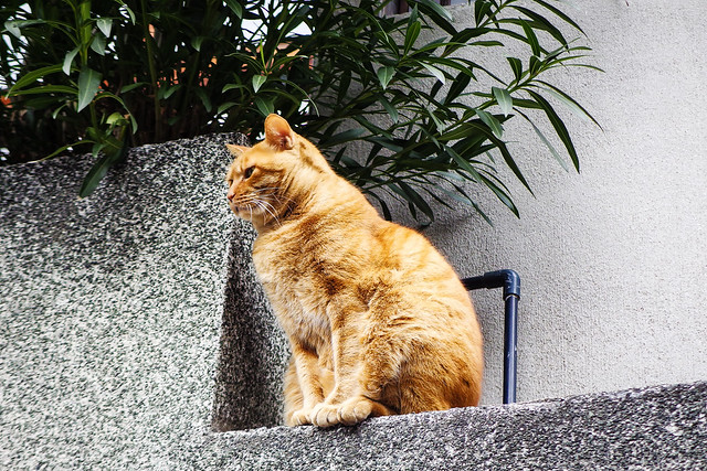 Today's Cat@2015-01-16