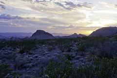 Desert Blue Hour