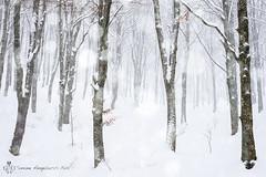 Snowfall (Simone Angelucci) Tags: snowfall lazio nevicata jenne simbruini livata