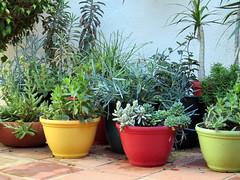 "Photo of 01/05/15 (GreenScaper) Tags: garden succulent gardening planters balcony drought balconies planter succulents capillary sip wicking subirrigation ""containergarden"" ""containergardening"" ""subirrigation"" ""subirrigatedplanter"" ""capillaryaction"" ""waterconservation"" ""selfwatering"" ""plantpot"" ""plantpots"" ""bubblesip"" ""bubblesips"""
