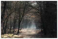 light at the end of the tunnel (stevefge) Tags: trees winter light sun sunlight netherlands licht nederland zon zonlicht mookerheide heumen nederlandvandaag