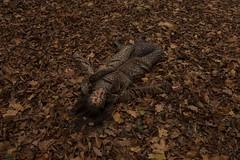 09_POLA_WILD_7495 (VonMurr) Tags: autumn wild woman girl wildlife hose leopard beast mimicry pola maurycygomulicki