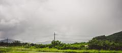 Floripa (John-Thomas Nagel) Tags: brazil landscape florianpolis streetphotography vegetation santacatarina naturnature jtn brasilienbrazilbrasil florianpolisflorianopolisfloripa