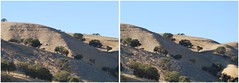 Upper Salinas Valley (twoeyes2010) Tags: 3d hillside centralcalifornia stereophotograph crossview coastalliveoak hyperstereo