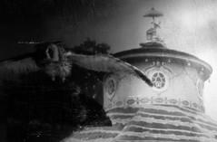 ... (elisachris) Tags: blackandwhite bw dark scary creepy spooky owl ricohgr dunkel eule schwarzweis
