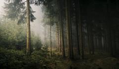 To a point far out of sight (desomnis) Tags: wood trees mist nature fog forest woodland landscape 50mm austria landscapes sterreich haze woods photomerge landschaft obersterreich 6d upperaustria canon50mmf14 landscapephotography bhmerwald bohemianforest dxofilmpack canon6d desomnis