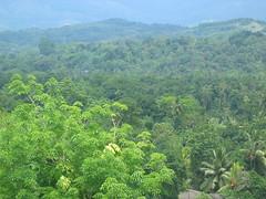 Forested Hills Near Kandy Sri Lanka