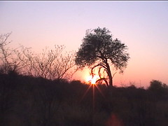 Sunrise over the kalahari