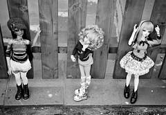 Odetta Carmen and Lenora (wixanawiggova) Tags: girls doll dolls hannah tan chloe bjd ruby dollfie fairyland msd supia minifée minisup msdbjd withdoll wixana