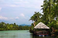 Loboc River (marcaccam) Tags: city nature water river landscape philippines cottage palmtrees bohol lobocriver nipahut