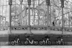 (Sonia Montes) Tags: madrid parque blackandwhite bw byn blancoynegro canon streetphotography bn retiro bicis retirodemadrid