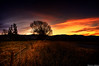 This side of the electric fence (Kevin_Jeffries) Tags: lighting light colour tree silhouette electric fence flickr hills flickrsbest kevinjeffries