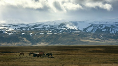 Iceland in a nutshell (lunaryuna) Tags: sky rain clouds season landscape iceland spring solitude lunaryuna stillness mountainrange snowcappedmountains southiceland icelandichorses eyjafjallajokull seasonalchange