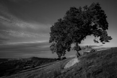 Tones of a low sun (felixspencerhdr) Tags: uk light england tree tower landscape hill monotone lancashire valley tone slope tonal