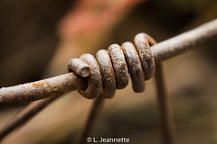 Rusted Coil (Lindsay Feldner) Tags: coil rust winding