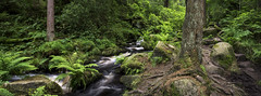 Wyming brook (Keartona) Tags: wyming brook panorama stream water woods sheffield england landscape ferns summer rocky beautiful nature