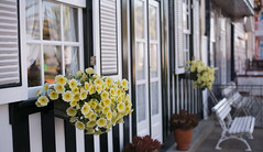 The White Bench (samuel.rolo) Tags: flowers white house beach yellow bench 50mm stripes monday 18 50 aveiro d610 costanova