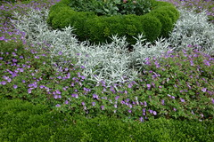DSC05123 (Putneypics) Tags: victorian boxwood geometric garden sunken bowditch brockway restoration beebe highfieldhall falmouth capecod putneypics