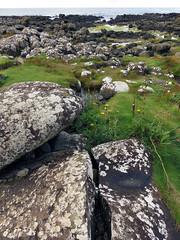 Stones, moss and ocean on our walk along Giant's Causeway in Ireland, UK (albatz) Tags: giantscauseway ireland uk rockformations basalt walk view evening sun eveninglight