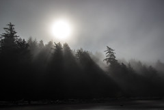In the Misty Morning Fog (ebhenders) Tags: sunshine fog beach trees rays olympic national park secondbeach sun