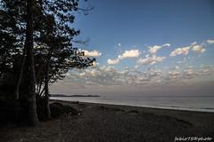 212#365 Alba Chiara (Fabio75Photo) Tags: spiaggia alberi mare alba mattino luci infinito cielo nuvole sky tree