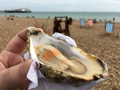 Daily oyster on the beach.