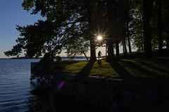DSC_6319 (vargandras) Tags: sunstar sunlight sunset sunshine shadow cyclist bike lake tree lakeshore hatanp tampere suomi finland