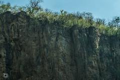 DSC03236 (Braulio Gmez) Tags: barrancadehuentitn biodiversidad caminoamascuala canyon canyonhuentitan faunayflora floresyplantas guadalajara guardianesdelabarranca huentitn ixtlahuacandelro jalisco mountainrange mxico naturaleza paisaje senderismo sierra barrancadehuentitn barranca huentitn ixtlahuacandelro mxico