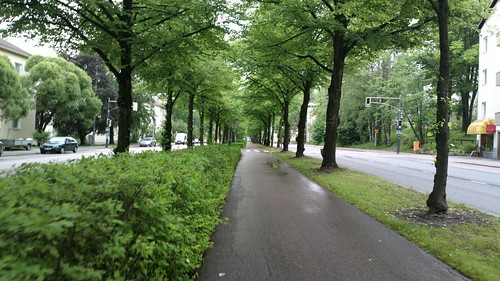2016-06-20 Koskelantie trees