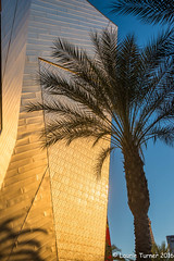 -20160721PSW 2016233-HDR-Edit (Laurie2123) Tags: lasvegas psw2016 photoshopworld golden glowlaurie2123laurie turner photographylaurie gold blue palm hdr