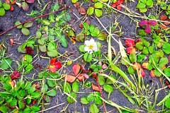 P1013079 (ekiny) Tags: lookingdown oregon nature