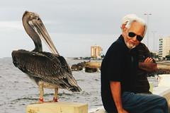 Between the street and the sea (leonardomuoz99) Tags: aire libre sea mar calle street oldman ave alcatraz rompeolas venezuela sky cielo casual sunglass olas nikon coolpix p500 nikoncoolpixp500 plumas disparo momento moment cuman social gente animal