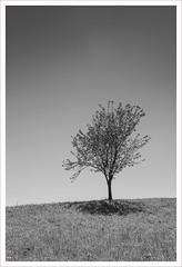 Tra il bianco e il nero (Outlaw Pete 65) Tags: paesaggi landscapes cielo sky albero tree rami branches foglie leaves prato lawn ombra shadow biancoenero blackandwhite bianco white nero black nikond600 nikkor24120mm zone lombardia italia