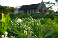 DSC03808 (nacestudio) Tags: church taiwan taoyuan flower coronarious gingerlily ginger lily rock house