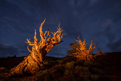 Blue Hour in the Pines (Jeffrey Sullivan) Tags: bristlecone pine inyo national forest county bishop california usa easternsierra astrophotography landscape nature milky way canon eos 6d photo copyright august 2016 jeff sullivan photography