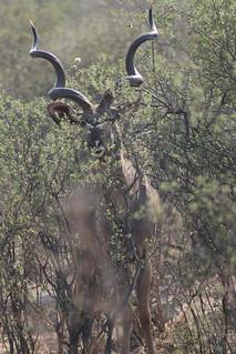 Namibia Dangerous Game Safari - Caprivi Strip 69