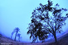 foggy day .. Bahrain (Ahmed Albaqer احمد الباقـر) Tags: foggy day weather 2016 widefisheye winter bahrain dair d750 landscape febraury