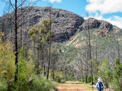 160924_Warrumbungles_5635.jpg (FranzVenhaus) Tags: trees creek countrybush plants cliffs australia mountains warrumbungles nsw water newsouthwales wilderness rocks aus