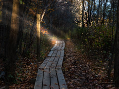 A Pathway to Enlightenment (Explore 16.10.27) (paulstewart991) Tags: canon70d canadian beavervalley forest fall pathway goldenhour outdoors autumn fallcolours