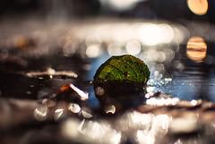 ritz (ewitsoe) Tags: leaf autumn fall ewitsoe nikond80 35mm street city 50mm cityscape urban sidewalk bokeh bokehexplosion bubbles sunshine light