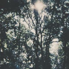 * (eli,michelini) Tags: intimit solitudine strisciamento lei faccia totale ritratto per morbido iver buono progetto natura quercia fogliame donna braccio mano vintage immediato film polaroid persone