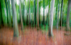 Unusually blurred (Photoecosse) Tags: flickrfriday trees woodland stonehaven dunnottar woods blurred creative abstract arty unusual