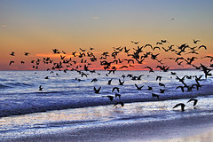 Vilamoura/Algarve (Zza Lemos) Tags: prdesol portugal puestadelsol praia gua water gaivotas sunset cu entardecer vilamoura algarve barcos natureza mar vero dunas