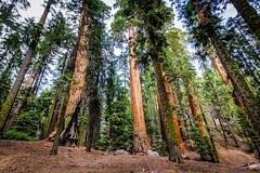 usa_westcoast-98 (Felixphotography.de) Tags: westcoast roadtripusa california utah arizona nevada