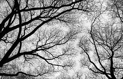 Austria Vienna 2014 Inverno 2H6A3402 - 1024x660 (Maurizio Roccia) Tags: alberi trees bw bn biancoenero inverno winter wien vienna cielo nuvole sky clouds up